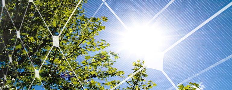 Tree reflecting in solar panel